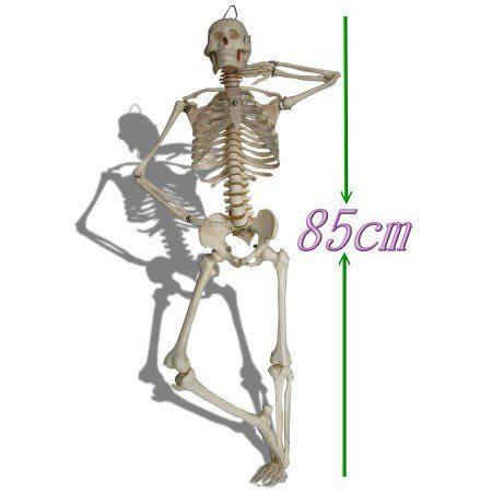 JP-203縮小比例人體全身骨骼教學模型(實用的人體模型/人骨模型/骨骼模型/骨架模型)