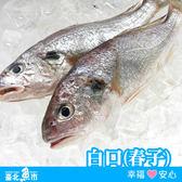 【台北魚市】溪和 白口(班鰭白姑魚) 250g