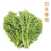 預購 【安心蔬食】水耕蔬菜-日本春菊(150g)