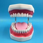 牙科材料/齒科耗材/口腔模型/牙科教學模型假牙模型 牙科牙齒模型