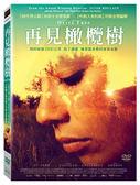 再見橄欖樹DVD
