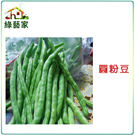 【綠藝家】E06.圓粉豆(壞豆)種子60...