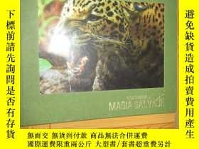 二手書博民逛書店COLOMBIA罕見MAGIA SALVAJE (詳見圖) 8開,硬精裝Y255351