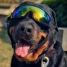 寵物狗狗眼鏡太陽防紫外線防風墨鏡...