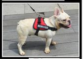黑五好物節 狗狗背帶胸背帶防爆沖大型小型犬牽引繩泰迪金毛舒適寵物用品狗帶 東京衣櫃