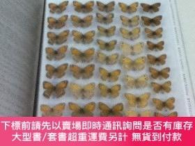 二手書博民逛書店英文)ウズベキスタンの蝶The罕見Butterflies of Uzbekistan (The Butterfli