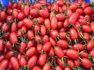 [台中]採果體驗-沐光農場〔1-4月蕃茄...