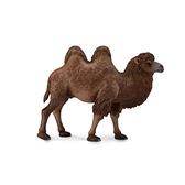 【永曄】collectA 柯雷塔A-英國高擬真動物模型-野生動物系列-雙峰駱駝