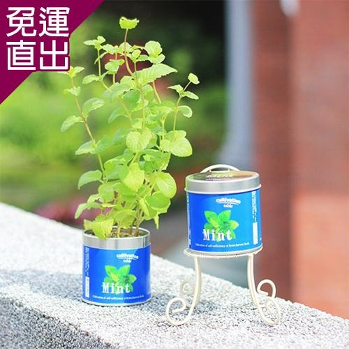 迎光 Cultivation Table栽培罐香薄荷【免運直出】