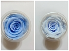 永生花玫瑰,藍色系尺寸5-6公分,單朵價格