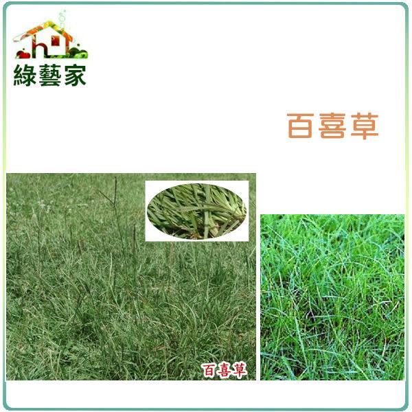 【綠藝家】百喜草種子1公斤