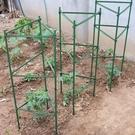黃瓜架西紅柿番茄攀爬支架爬藤植物支架茄子架豆角爬藤架支柱園藝 夢幻小鎮