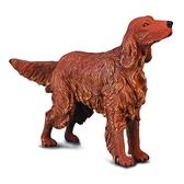 【永曄】collectA 柯雷塔A-英國高擬真動物模型-家庭動物- 愛爾蘭雪達