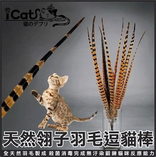 *WANG*【寵喵樂】純天然手工羽毛-長雞尾逗貓棒/增加互動、任何貓齡都可玩