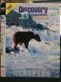 影音專賣店-O15-041-正版DVD*紀錄【阿拉斯加野生動物/Discovery】-在土語裡阿拉斯加意指絕佳之處