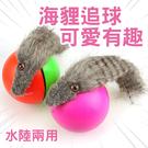 ⭐星星小舖⭐台灣出貨 電動海狸球 電動海貍球 滾球玩具 水陸兩用玩具 電動滾球 海狸球 逗貓球
