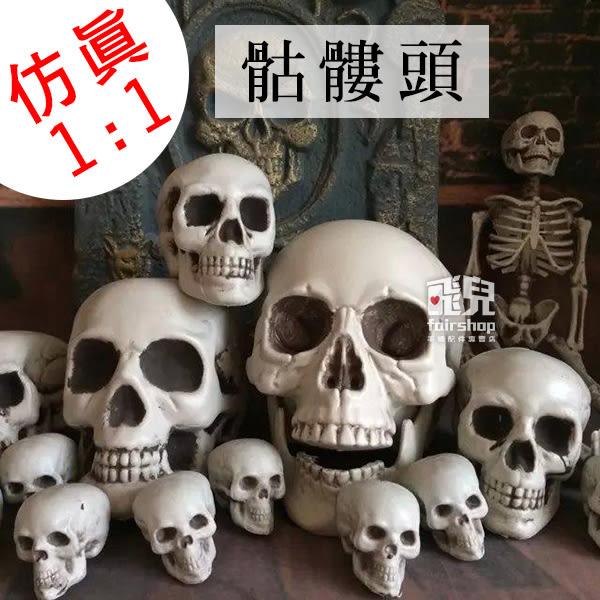 【飛兒】仿真1:1尺寸!骷髏頭 一比一 人類模型 人體 骨骼模型 頭骨 骷髏模型 白骨 161