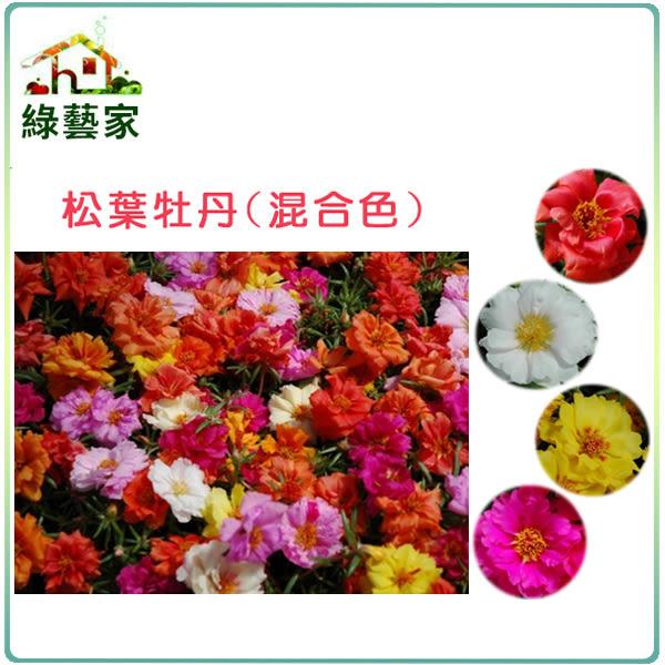 【綠藝家】大包裝H37.松葉牡丹(混合色,匍匐性)種子450顆