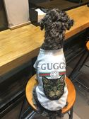 狗狗衣服夏裝薄款透氣泰迪雪納瑞比熊法斗巴哥貓咪寵物衣服小型犬 全館八五折 最後一天!