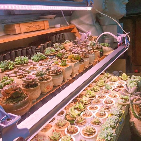 補光燈德澳全光譜led蔬菜花卉食蟲草植物生長燈多肉補光燈防徒上色 LX交換禮物