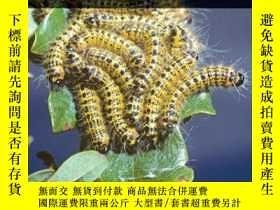 二手書博民逛書店Insect罕見Outbreaks RevisitedY410016 Pedro Barbosa (Ed...