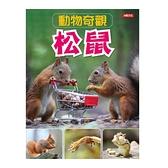 動物奇觀:松鼠