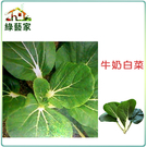 【綠藝家】大包裝A10.牛奶白菜種子13...