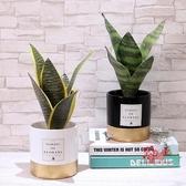 仿真盆栽 北歐仿真植物INS風裝飾網紅家居擺件臥室盆栽擺設客廳創意桌擺花 2色