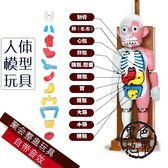 文盛仿真人體模型拼裝日本韓國益智恐怖惡搞兒童節整蠱桌面玩具—交換禮物
