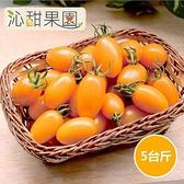 沁甜果園SSN.橙蜜香小番茄(5斤/盒)﹍愛食網