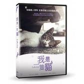我是一隻貓 DVD I am a Cat 免運 (購潮8)