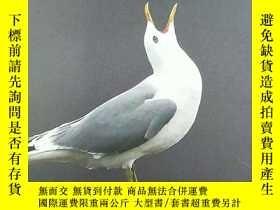 二手書博民逛書店Gulls罕見Simplified A comparative