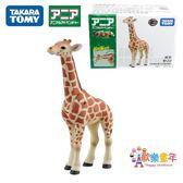 長頸鹿玩具TOMY多美卡仿真草原野生兒童口袋關節可動小動物模型