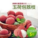 【屏聚美食】南勝名產荔香白玉 玉荷包荔枝(5斤)-預購