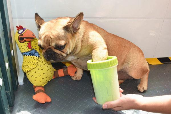DEXAS寵物狗狗洗腳杯狗洗爪子狗洗腳神器洗腳機柔軟硅膠刷