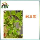 【綠藝家】J05.豌豆嬰(芽菜種子)種子...