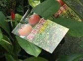 水果果苗 ** 櫻桃山竹 ** 4.5吋盆/ 高15-30公分/ 一年就會結果【花花世界玫瑰園】R