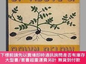 二手書博民逛書店Up罕見Above & Down Below (A First Book About Plants)-上下(第一本