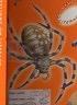 二手書R2YB《SPOTLIGHT ON LITERACY》2000-AOKI-