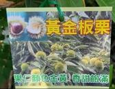 花花世界_水果苗--黃金板栗--果仁顏色金黃/4吋盆/高30-50cm/Ts