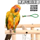 鳥用脖繩脖套鈴鐺鸚鵡腳環鍊/畫眉黃鸝蠟嘴伯勞八哥/繩/鎖/脖/套 快速出貨