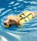 大狗狗衣服金毛游泳圈
