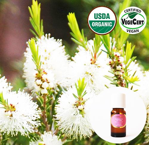 有機精油10ml- 茶樹 Tea Tree Organic Essential Oil ~ 美國USDA有機認證