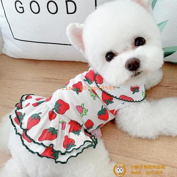 草莓情侶裝夏季薄款寵物狗狗連衣裙貓咪泰迪博美比熊衣服夏小型犬小狗狗【小獅子】