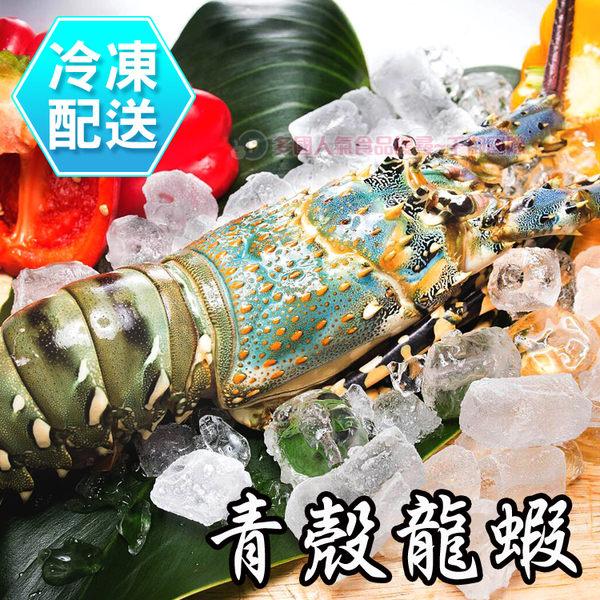 活凍青殼龍蝦 單隻 冷凍配送 [CO00440] 千御國際