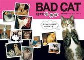 (二手書)257隻壞貓咪
