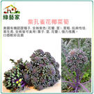 【綠藝家】大包裝B06.紫孔雀花椰菜筍種子300顆