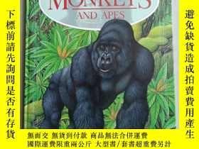 二手書博民逛書店MONKEYS罕見AND APES A VISUAL INTRODUCTION 猴子和猿的視覺介紹(英文原版)