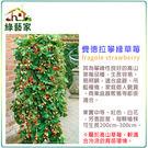 【綠藝家】I11.費德拉攀緣草莓種子3顆...