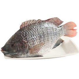 吳郭魚(台灣鯛)380g/尾